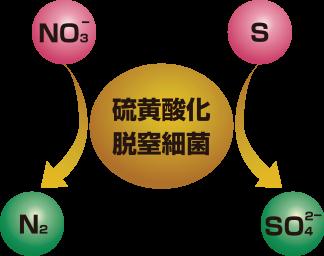 硫黄酸化脱窒細菌による硝酸性窒素浄化模式図